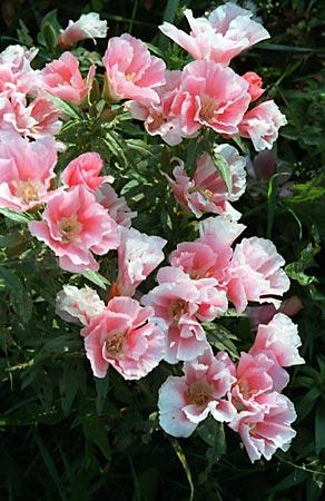 Цветы из ткани-крупные.Диаметр более 10 см.