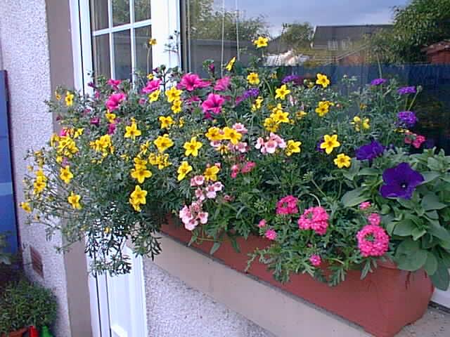 Виды цветов для балконов в подмосковье..
