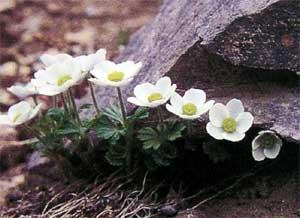 цветы и цветки таганай