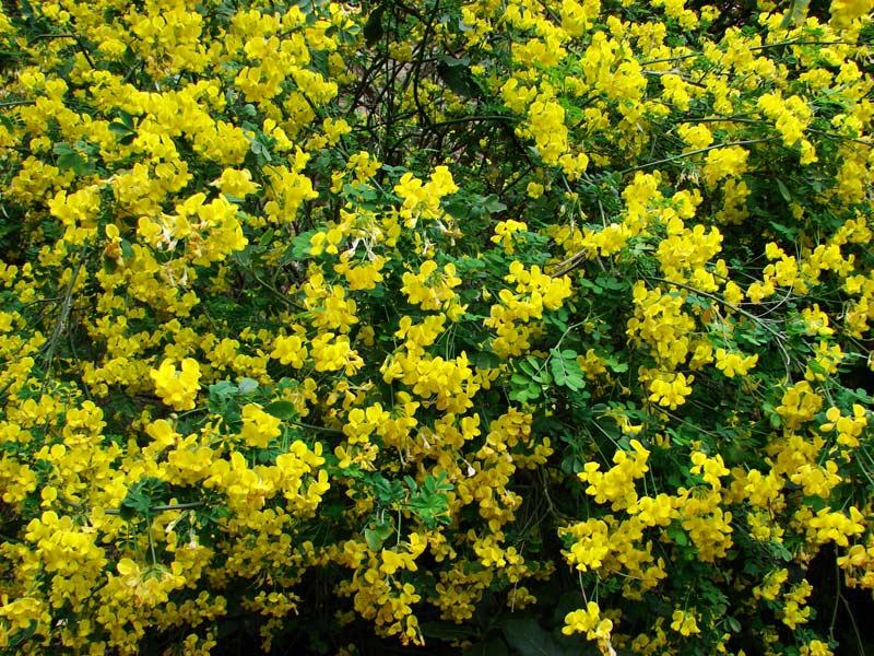 Фото цветов - Фото цветов.