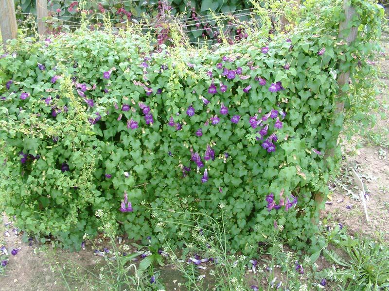 Каталог садовых цветов  названия фото и описание садовых