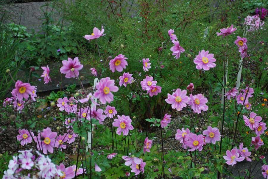чем отличаются растения паразиты от растений полупаразитов