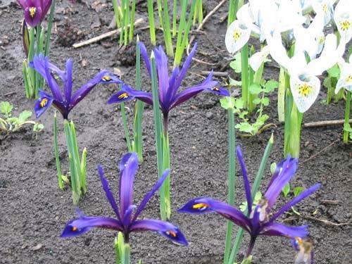 Цветы в саду и на даче фото