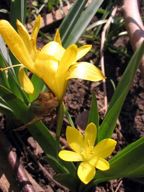 Какие цветы сажают в плоские и широкие