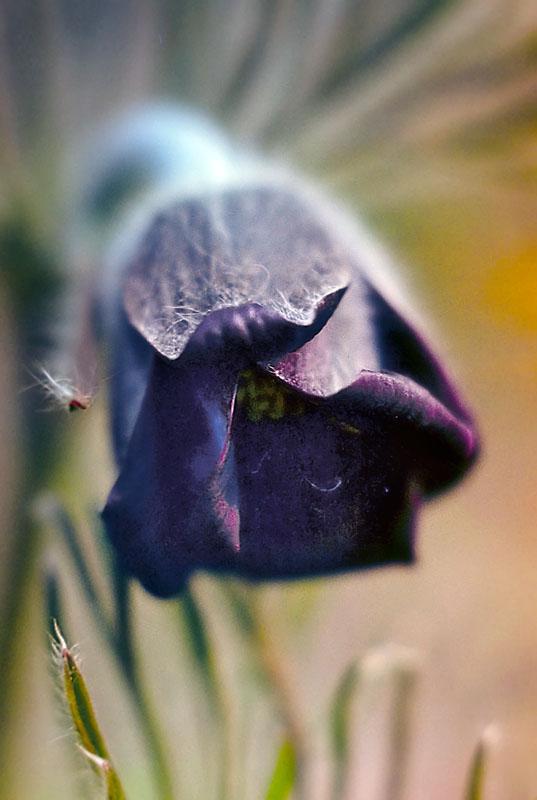 Вс для огорода сада и комнатных цветов