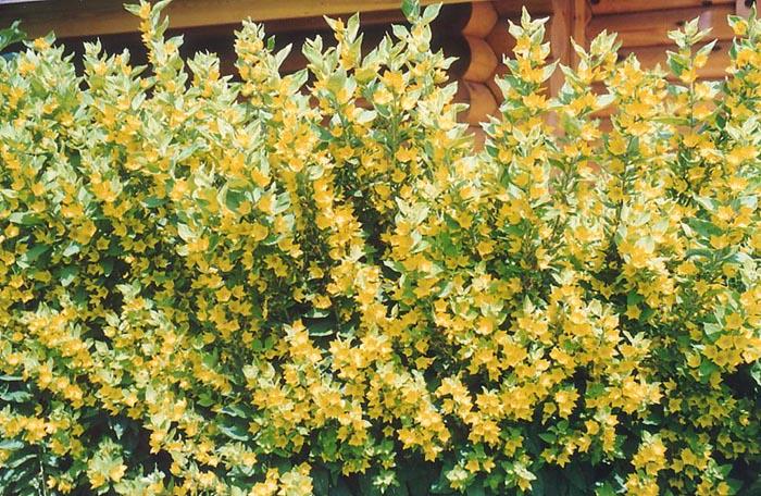 Как бороться с воровством цветов?