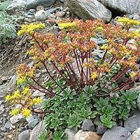 Многолетние цветы выращивание на урале 53