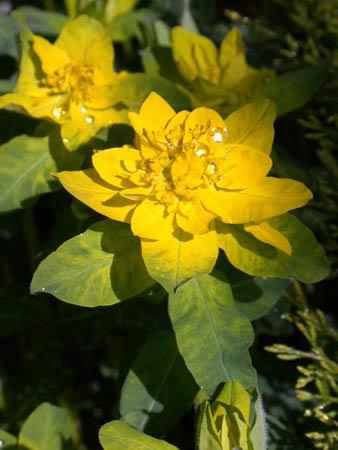 Цветник в тени и полутени тенистый сад Цветы