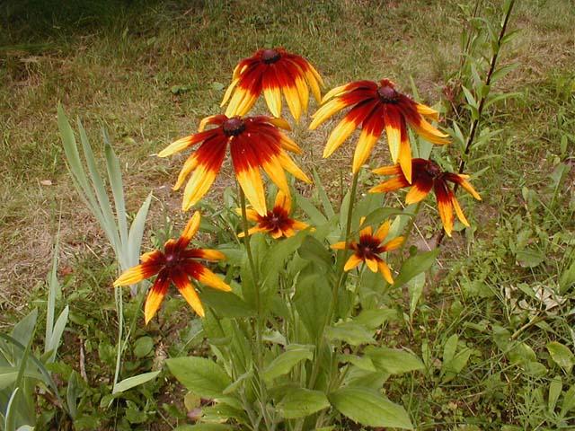 Фотографии садовые зимостойкие
