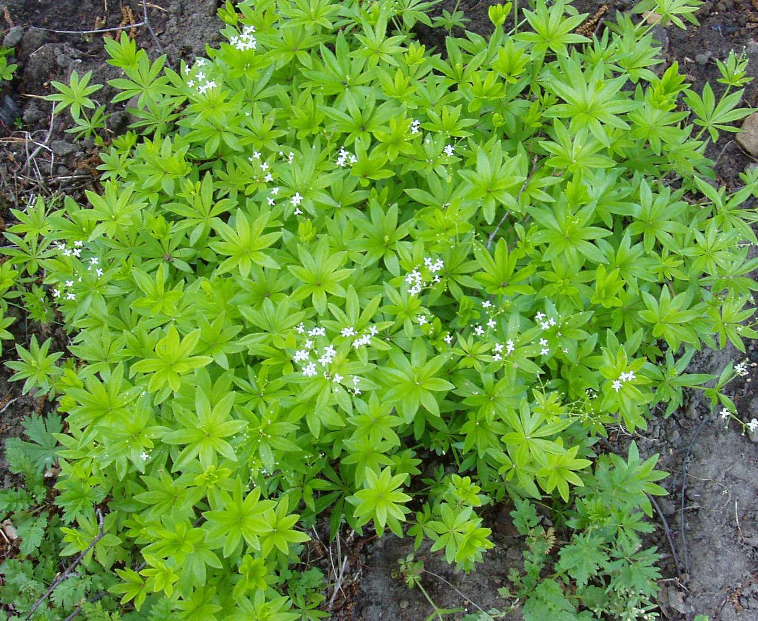 Домашние растения цветы