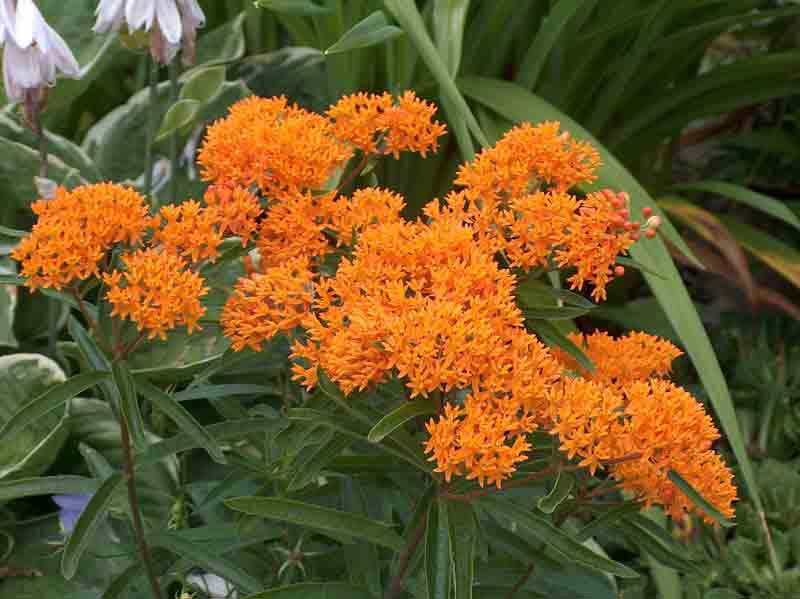 Цветы цветущие все лето с фото только