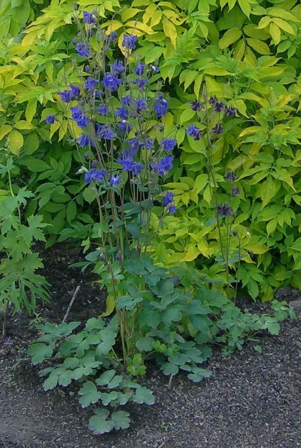 Зеленая дача цветы для вашего сада