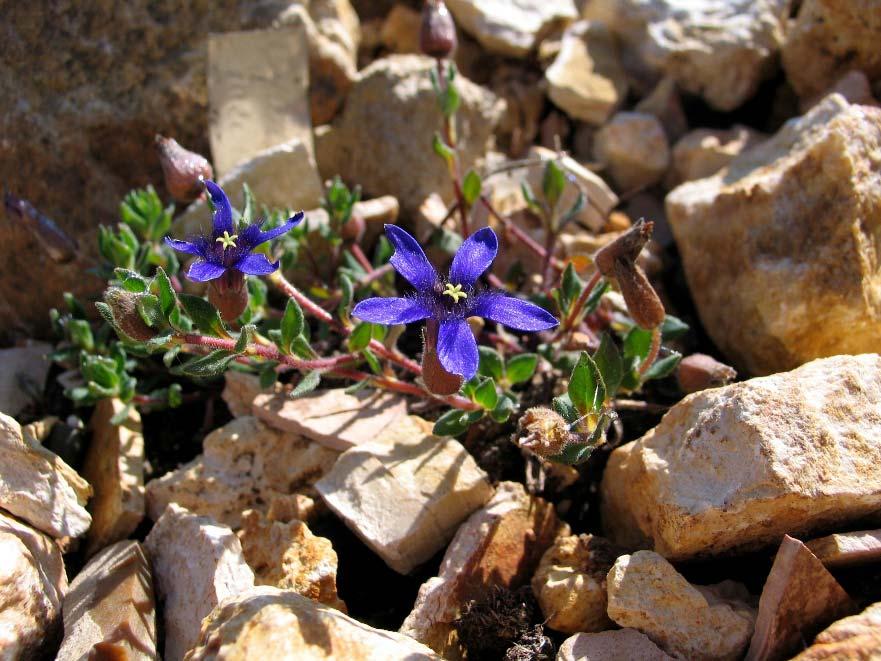 Садовые цветы b цветоводы